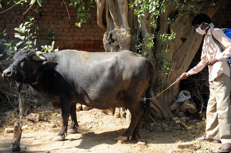 INDIA-HEALTH-FEVER